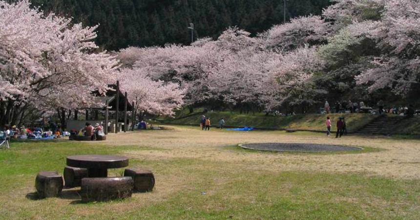 阪南市鳥取池緑地桜の園