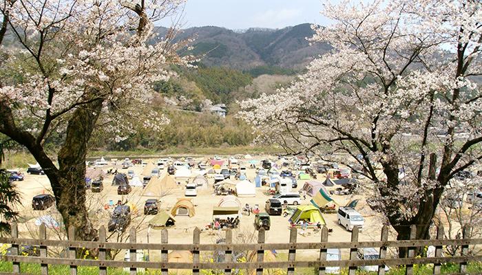 お花見木津川笠置キャンプ場河川敷イベントを積極開催