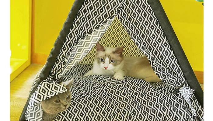 クッションつきティッピーテント1ネコ用テント家キャンで癒されたい