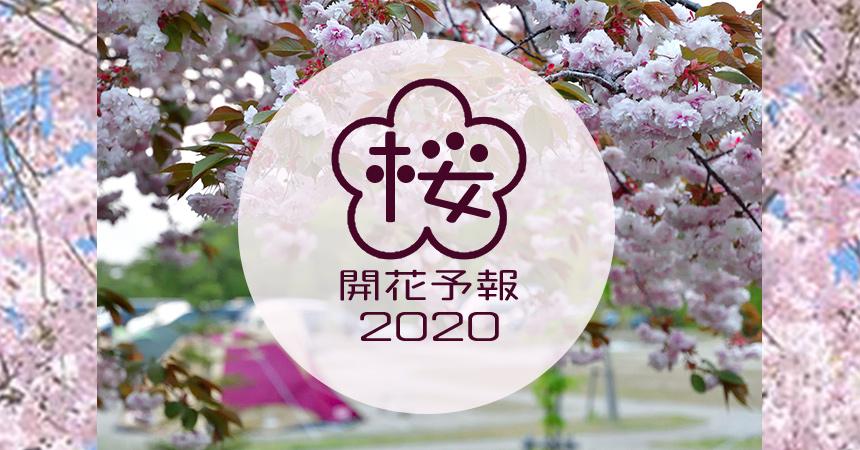 2020年桜開花予想春キャン開始だ